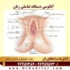 آناتومی دستگاه تناسلی زنان
